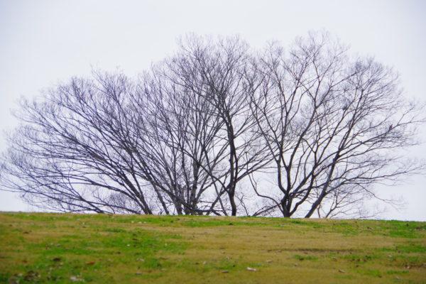 白鳥まつり 多々良沼公園の自然