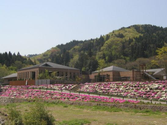 倉渕せせらぎ公園 芝桜