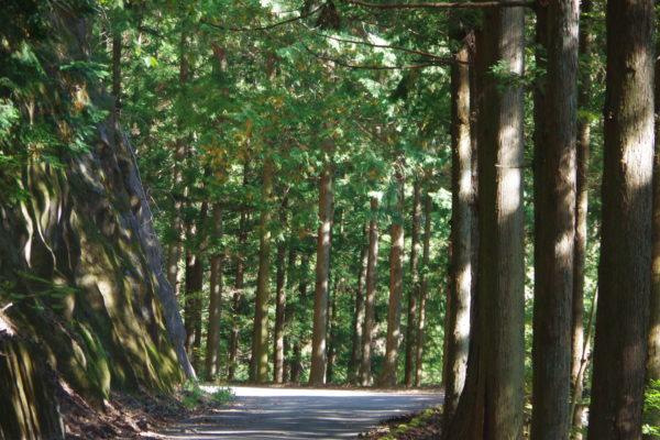 小中大滝けさかけ橋 森林