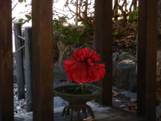白根温泉 花