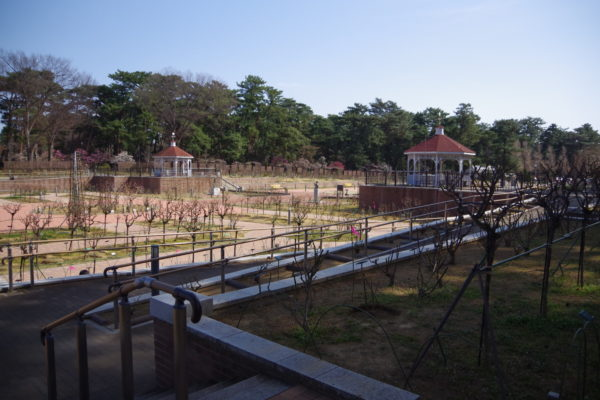 敷島公園門倉テクノばら園 公園内風景