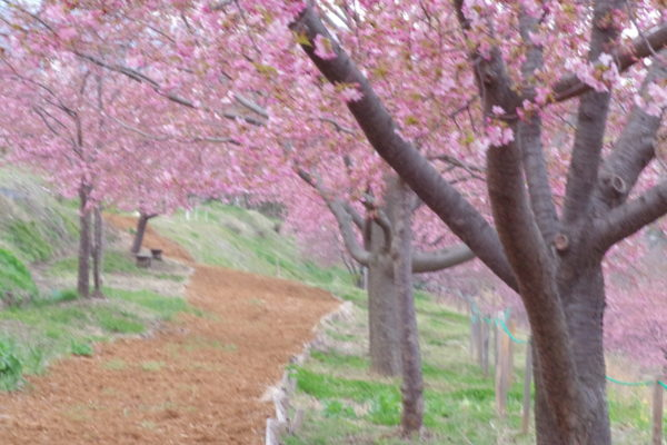 かわづ桜の丘白井 遊歩道