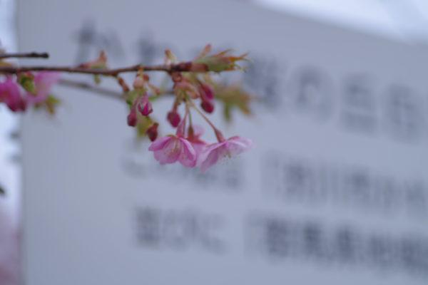 かわづ桜の丘白井 緑化意識