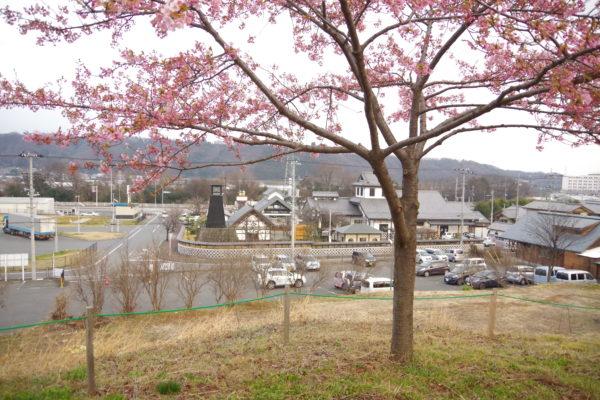かわづ桜の丘白井 撮影