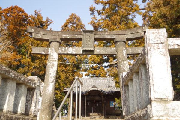 河津桜 熊野神社