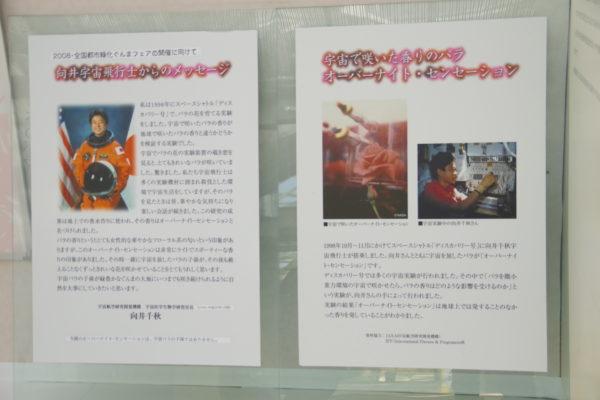 敷島公園門倉テクノばら園 バラの歴史コーナーパネル展示