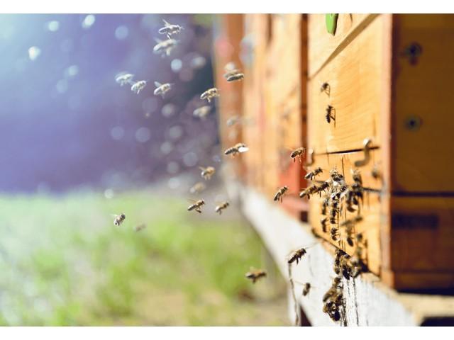 駆除 相場 蜂の巣