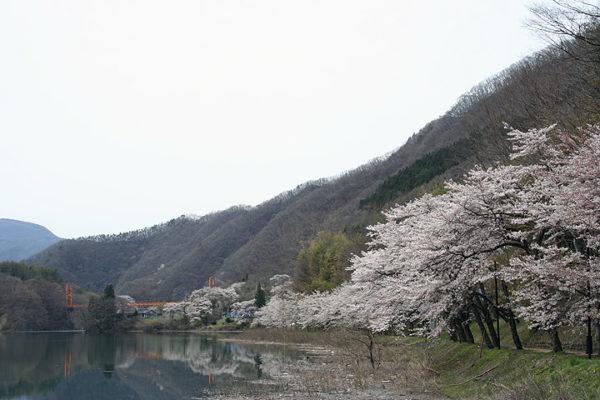 沼田市の桜スポット 春