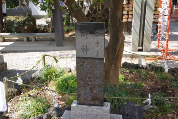 進雄神社 御神木の「橘」