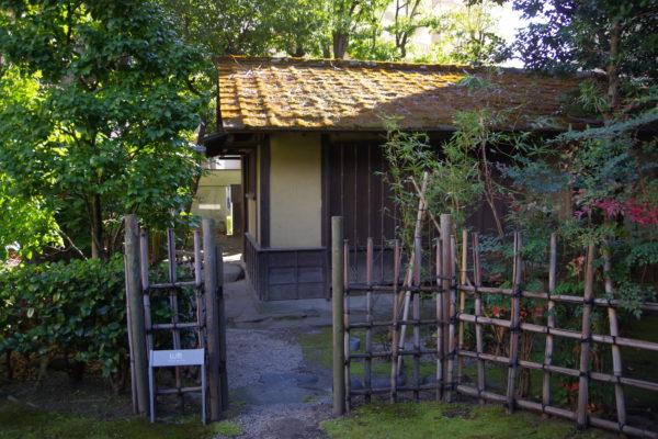 旧井上房一郎邸 庭園の木