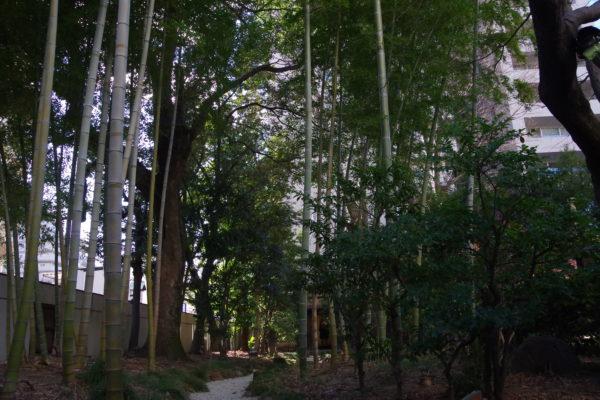 旧井上房一郎邸 広い庭園・竹林
