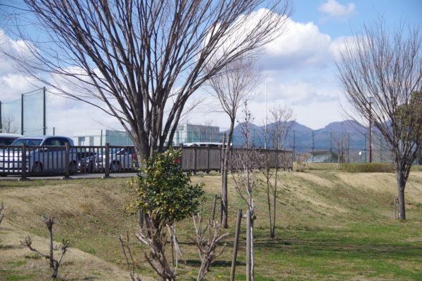 三ツ寺公園 ソフトボール場