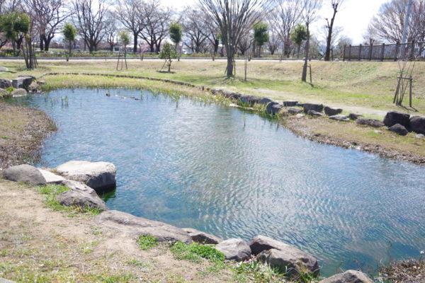 三ツ寺公園 水辺の生息ゾーン