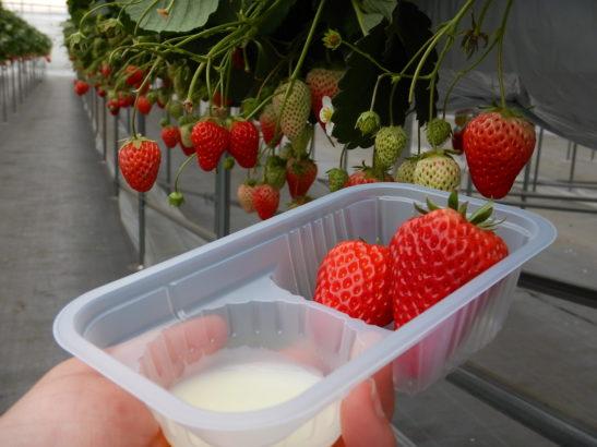 れいわイチゴ園 練乳とイチゴ