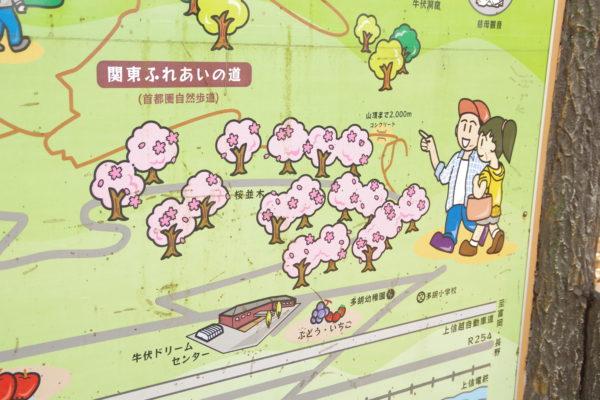 牛伏山自然公園 桜並木の千本桜案内