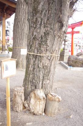 岩神稲荷神社 御神木乳銀杏