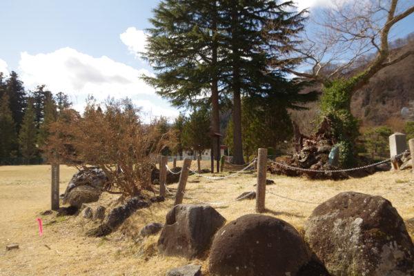 謙信のさかさ桜 芝生の広場