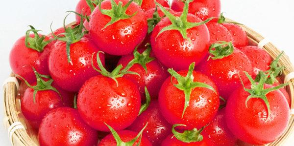 三光ファーム トマト