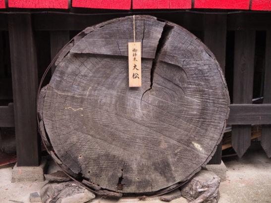 五霊神社 ご神木