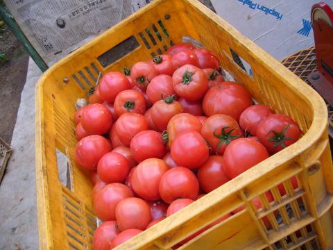 栗田温室農園 トマト