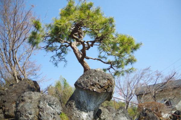 珍宝館 庭園の木