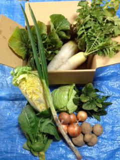 ひふみ農園 野菜
