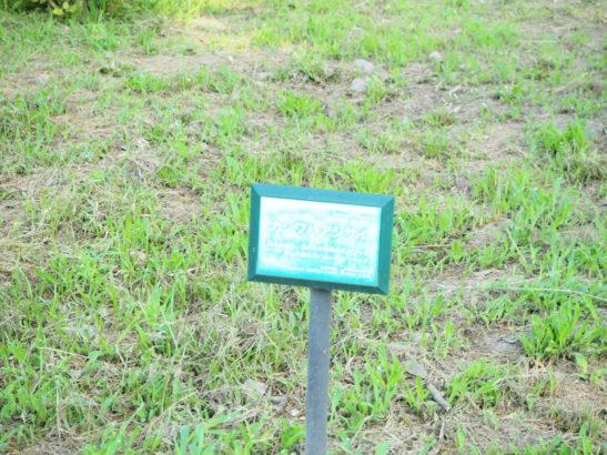 荻窪公園 池