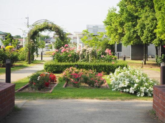 玉村町北部公園 バラ園