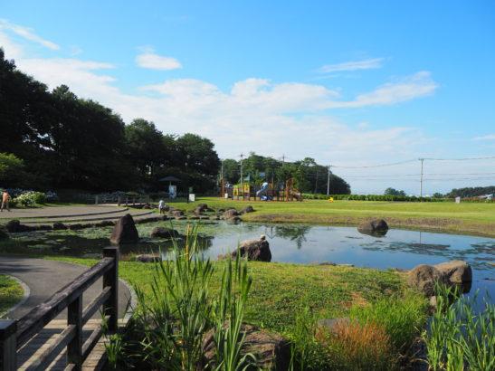 荻窪公園 公園