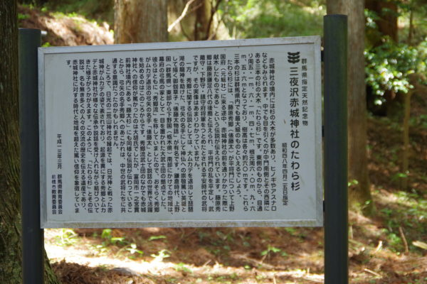 三夜沢赤城神社 たわら杉