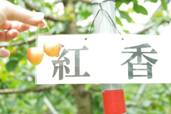 希望の丘農園 紅香