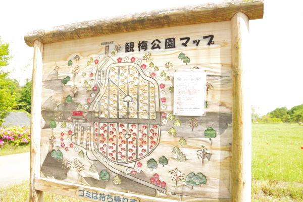 観梅公園 マップ