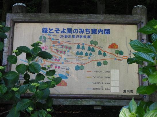 渋川市 小野池あじさい公園 開花情報