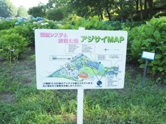 荻窪公園 アジサイの丘 地図