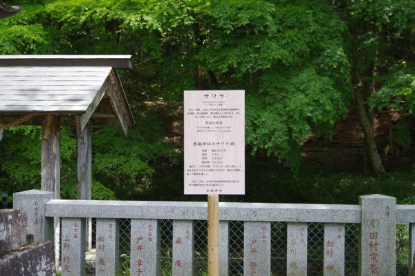 三夜沢赤城神社 手水舎