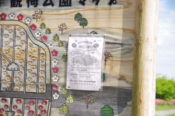 観梅公園 ポピー祭り