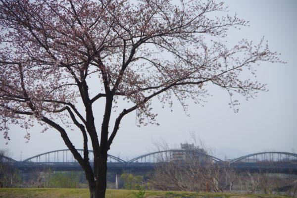 楽歩堂前橋公園 花