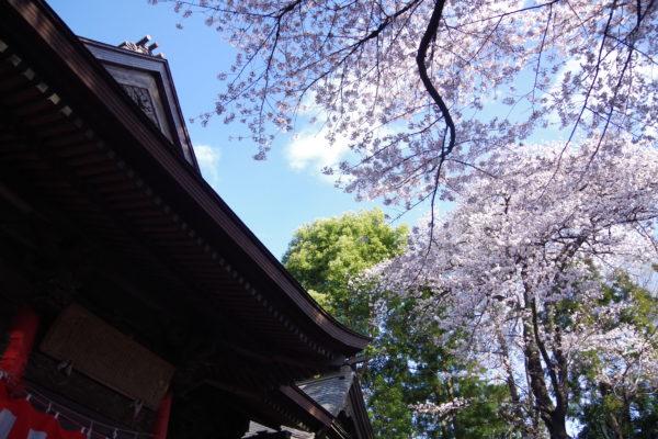 烏子稲荷神社 神社 花