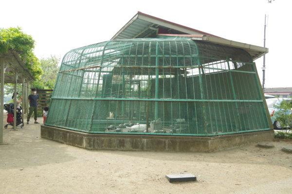 高崎公園 動物