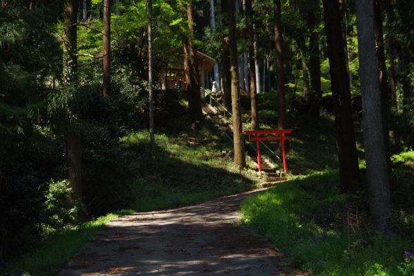 矢背負稲荷神社 山道