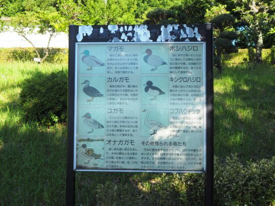 愛宕山ふれあい公園 野鳥 説明看板