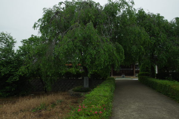 西光寺 木々