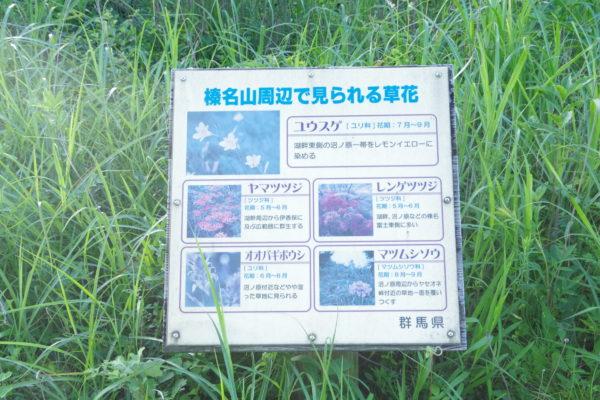 県立榛名公園 草花看板