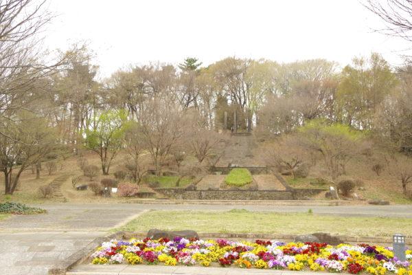 大室公園 花