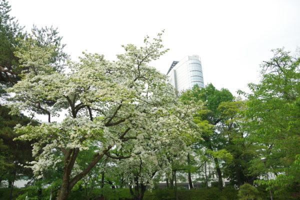 高崎公園 花