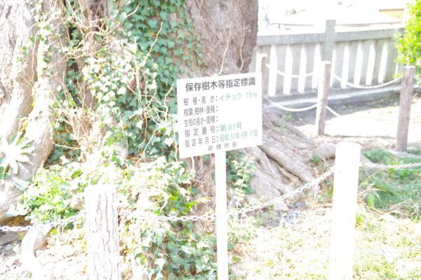 前橋八幡宮 保存樹木看板