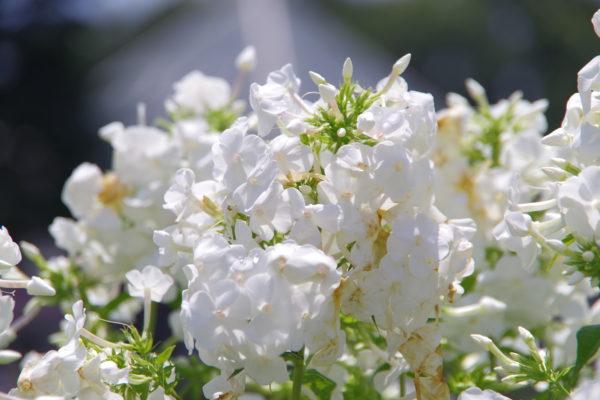 ぐんまフラワーパーク 花