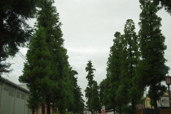 杉並木 上毛かるた 中山道 中仙道