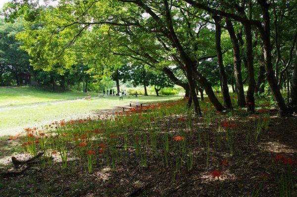 御嶽山自然の森公園 群馬 彼岸花