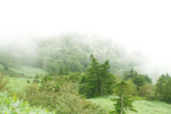 渋峠 渋峠ホテル 芳ヶ平湿地群の霧